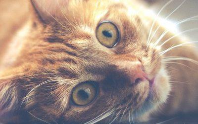 Katzenkrallen und Schokohände